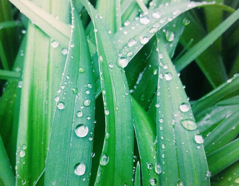Листья с каплями дождя