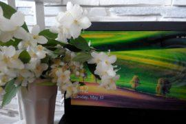 Ноутбук и цветы