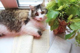 Кот читает Улисс