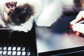 Кот спит на ноутбуке