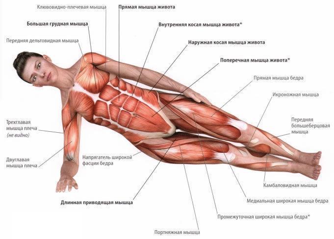 Зачем укреплять мышцы кора