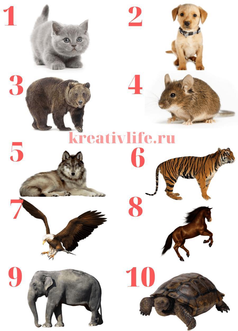 Тест для девушек выбери животное